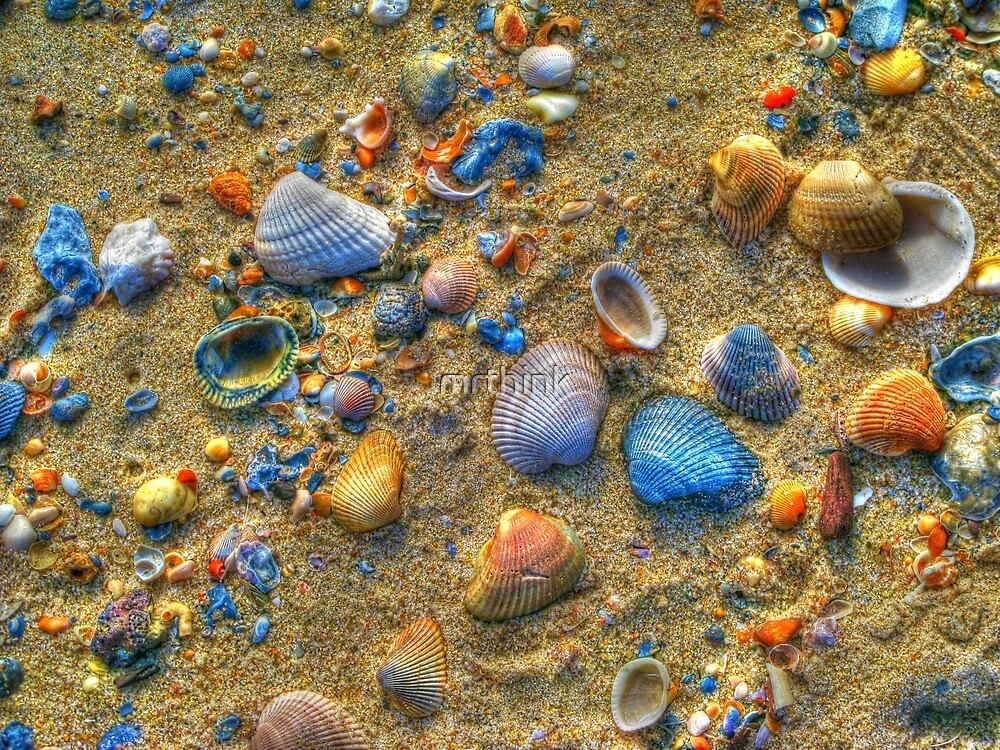 Seashells Aglow by mrthink