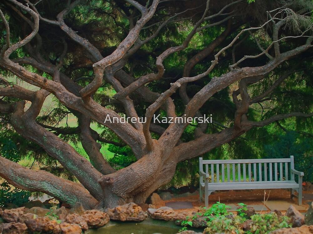 Dream Tree by andykazie