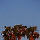 SoCal Moonrise by Chet  King