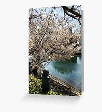 spring cherry blossoms, pink flowers. Japan. Greeting Card