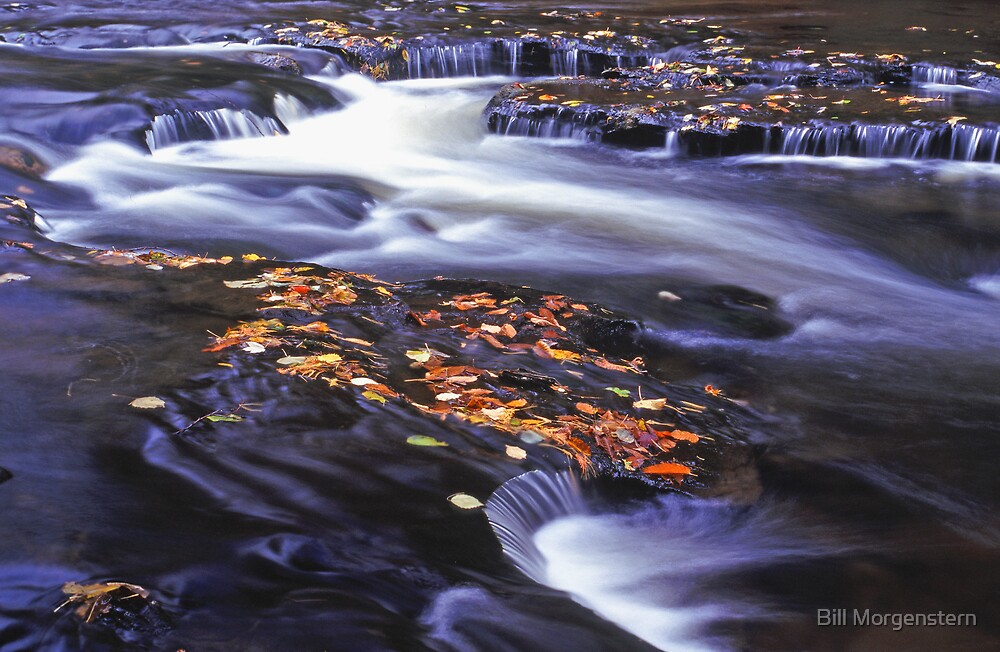 Going With The Flow by Bill Morgenstern