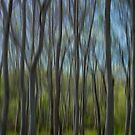 My Little Wood  by M S Photography/Art