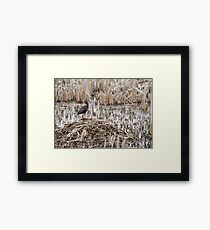 White-faced Ibis 2017-1 Framed Print
