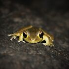 Little brown frog by AnnaKT