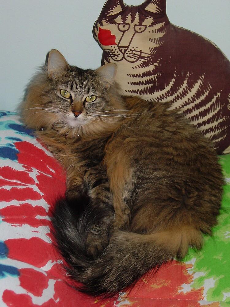 cat on cat by suelucat