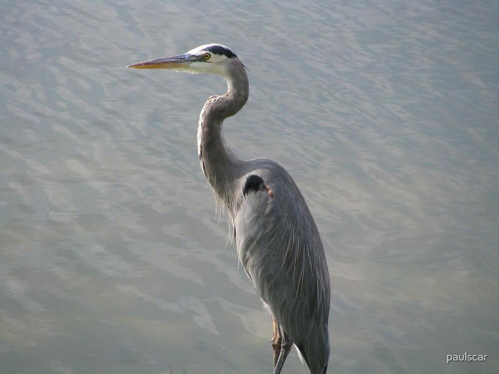 heron by paulscar
