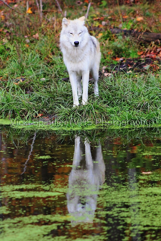 You're My Reflection by Vicki Spindler (VHS Photography)
