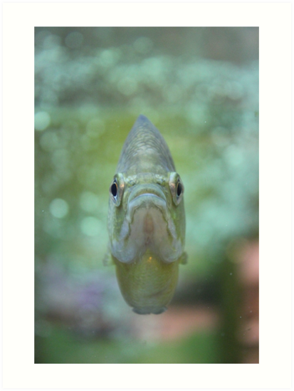Happy Fish by Vicki Spindler (VHS Photography)