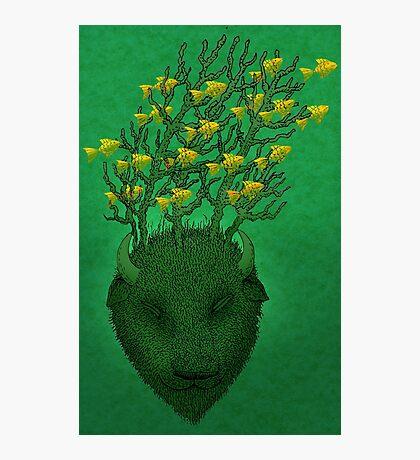 Sea Buffalo Dreaming Green Heart  Photographic Print