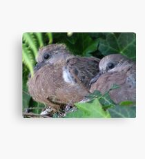 Baby Doves Canvas Print
