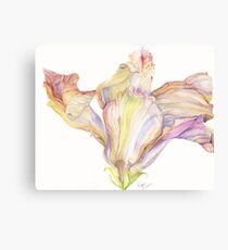 Faded Hibiscus Blossom Canvas Print