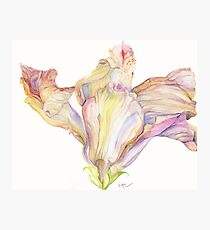 Faded Hibiscus Blossom Photographic Print