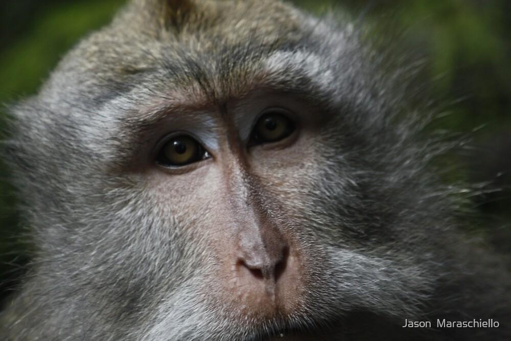 Sage Monkey by Jason  Maraschiello