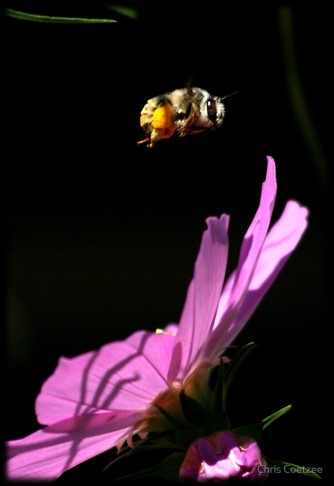 Fly By Bee.. by Chris Coetzee