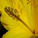 Hibiscus Shadow by WildestArt