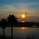 Palm Trees And The Marsh by Kathy Baccari