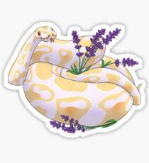 Ball Python - Lola Sticker