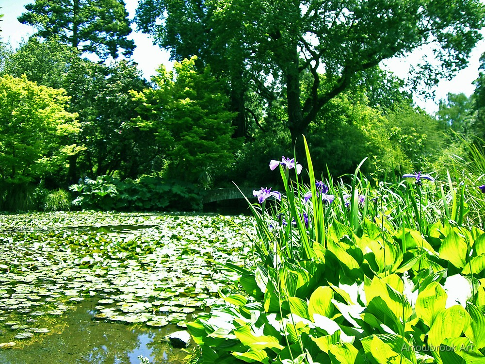 The Lily Pond by John Brotheridge