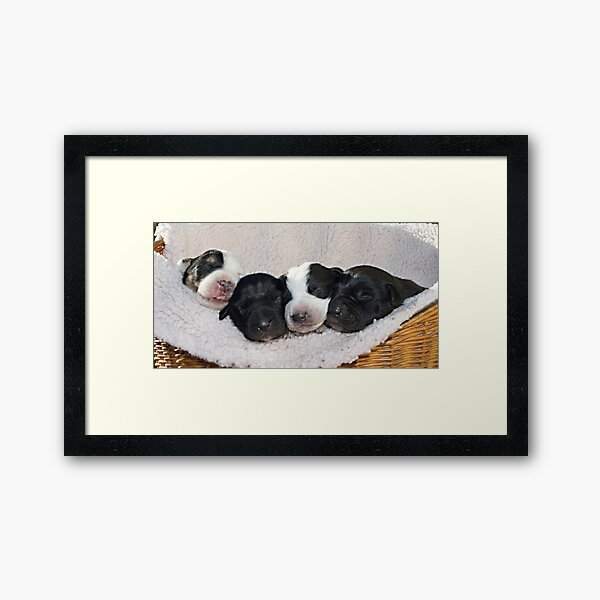 The Four Amigos. Framed Art Print