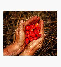 Gardeners rewards Photographic Print