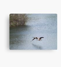 Flying Canada Geese, Jersey City, New Jersey Canvas Print