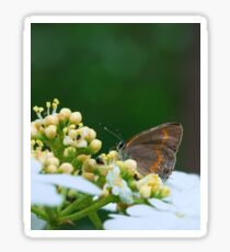 First Macro of the Season: Gray Hairstreak Sticker