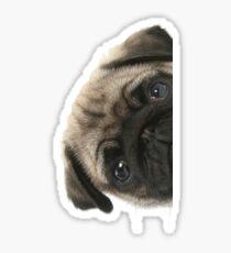Peek A Pug Sticker