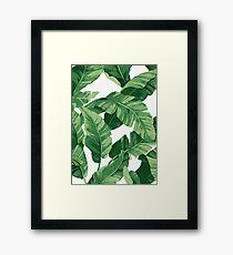 Tropical banana leaves II Framed Print
