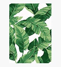 Tropical banana leaves II Photographic Print