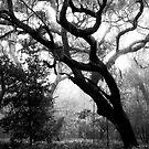 Whispering Oaks by Rebecca Cruz