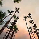 Desert Palms Twilight by Amyn Nasser