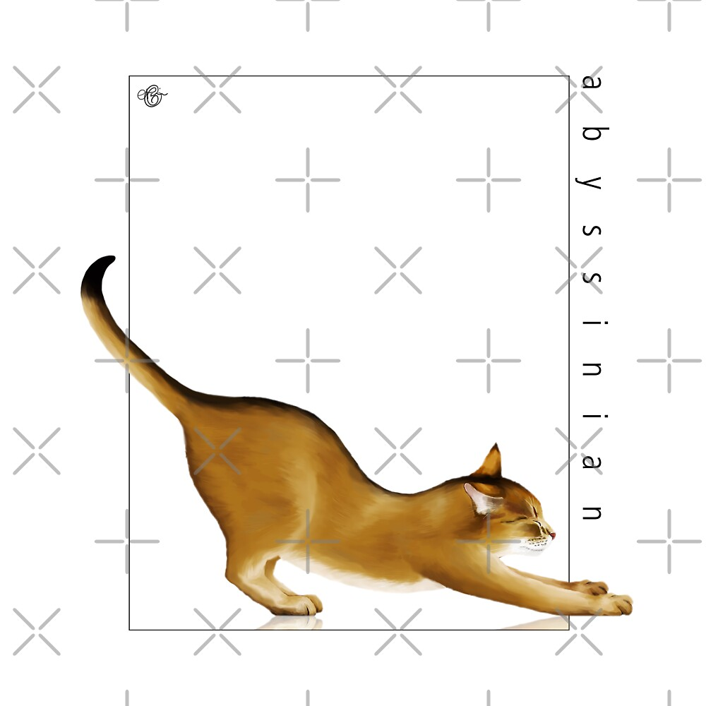 Cat Breeds: Abyssinian - White Background by Martine Carlsen