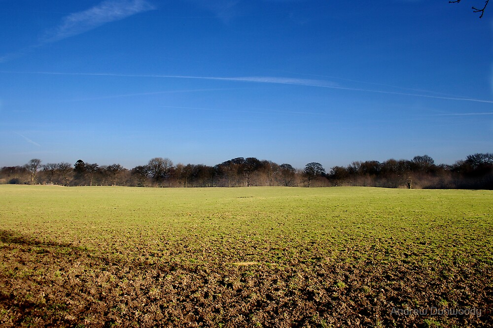 Field by Andrew Dunwoody