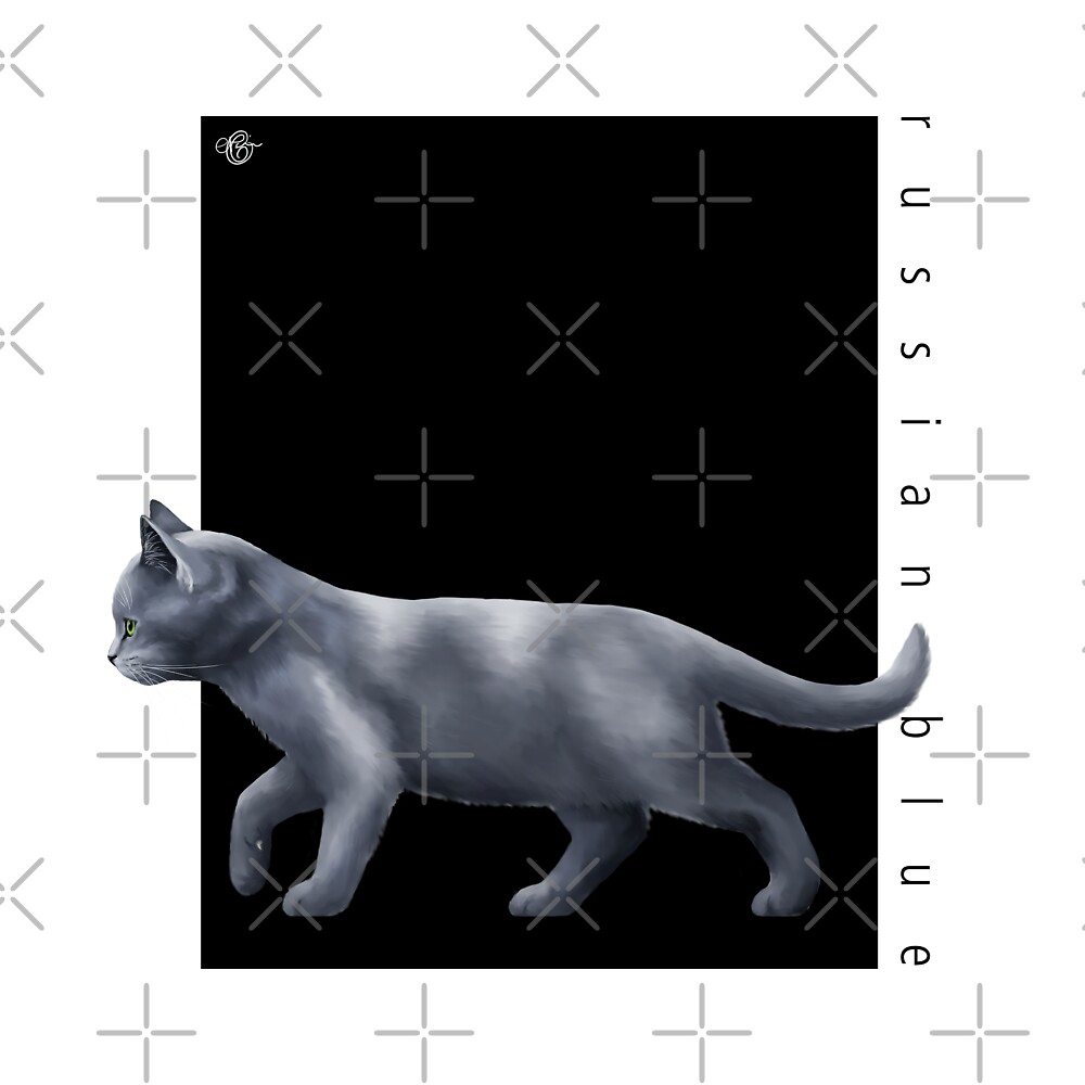 Cat Breeds: Russian Blue - Black Background by Martine Carlsen