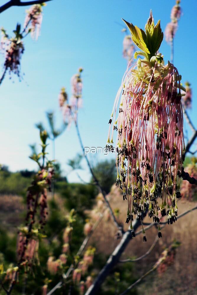 Spring Seedpods by pange