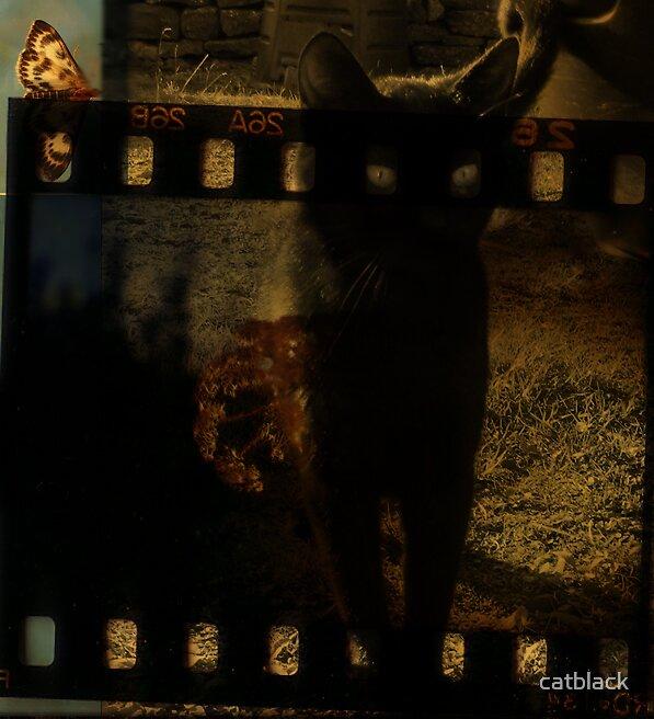 Catastrophe by catblack