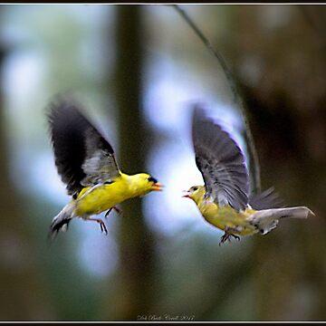 Flying Finches, Hidden Dragon by Badtgirl