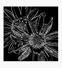 Daisy Drawing Black And White Photographic Print