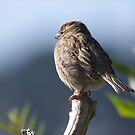 Young Sparrow.....I'm all alone and cold.........!! by Roy  Massicks