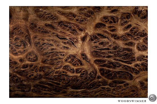 WoodSwimmer Still no.3, Red Mallee Burl by bfophoto