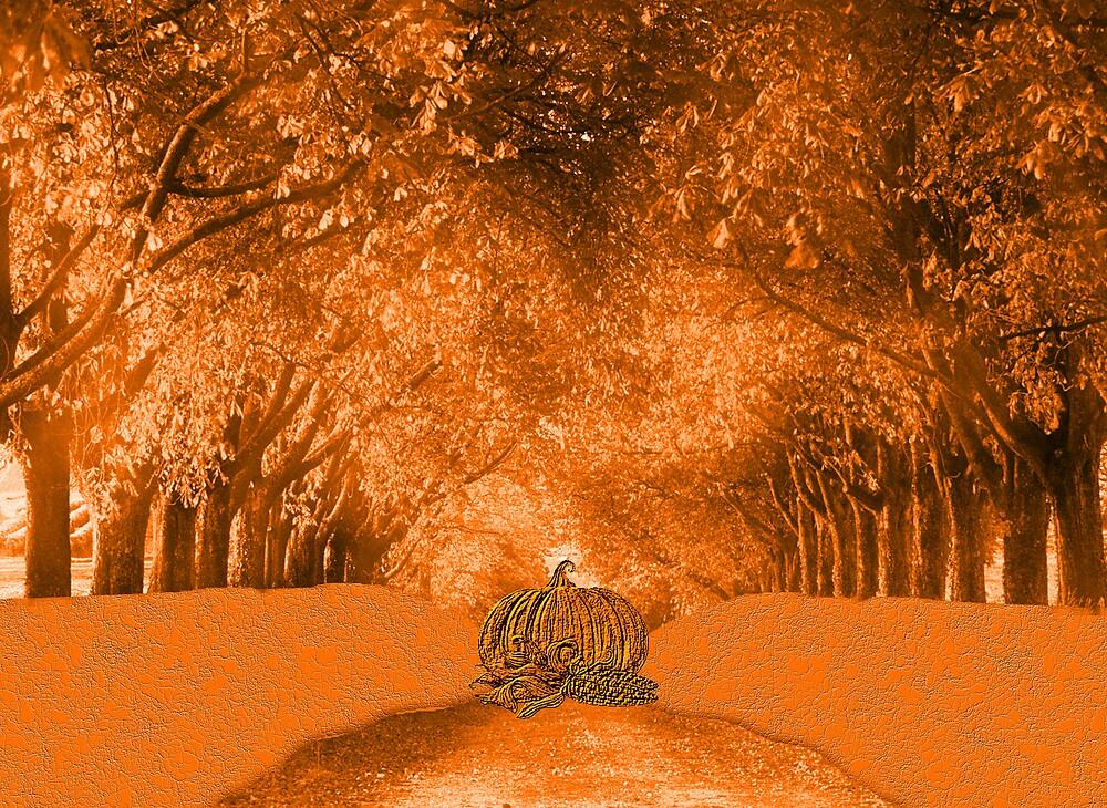 pumpkin Orange by shadyuk