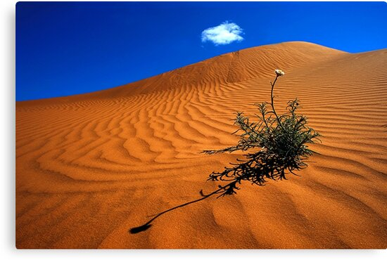 1528 Perry Sand Dune by Hans Kawitzki