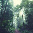 Forest Path by Dirk Wuestenhagen