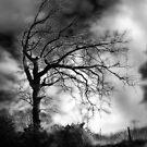 Spooky tree..... by Rhonda Ford