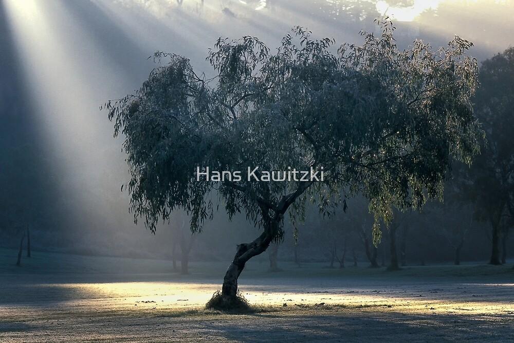 1523 Morning Frost by Hans Kawitzki