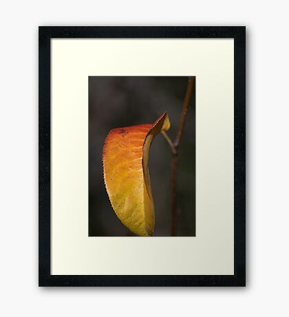 The Last Piece Of Her Dress Framed Print
