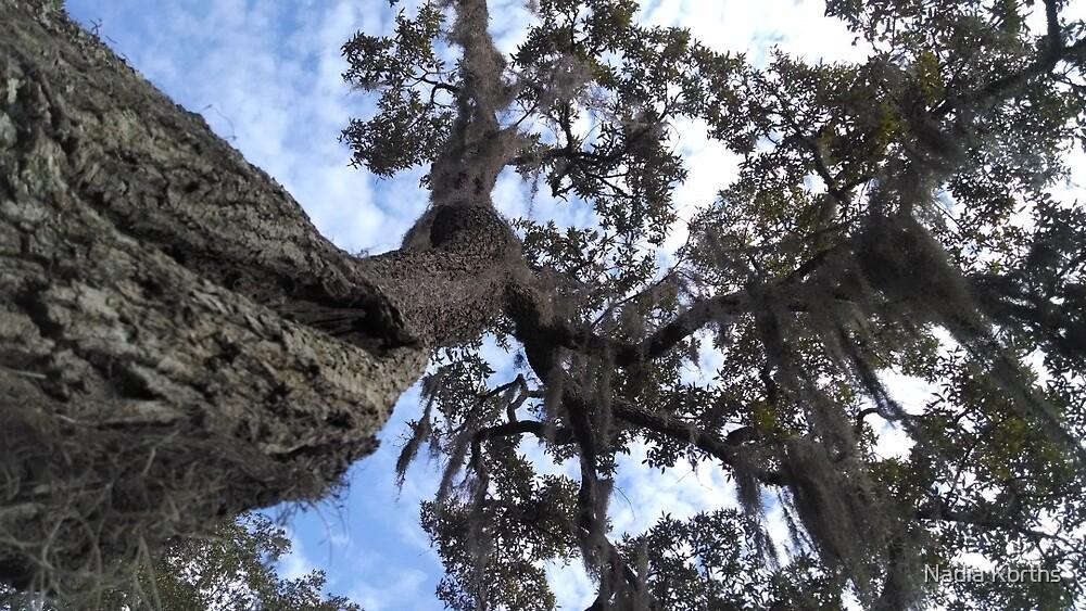 Live Oak Tree Trunk Rising Into the Sky by Nadia Korths