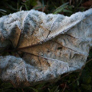 Frosty Leaf by decoaddict