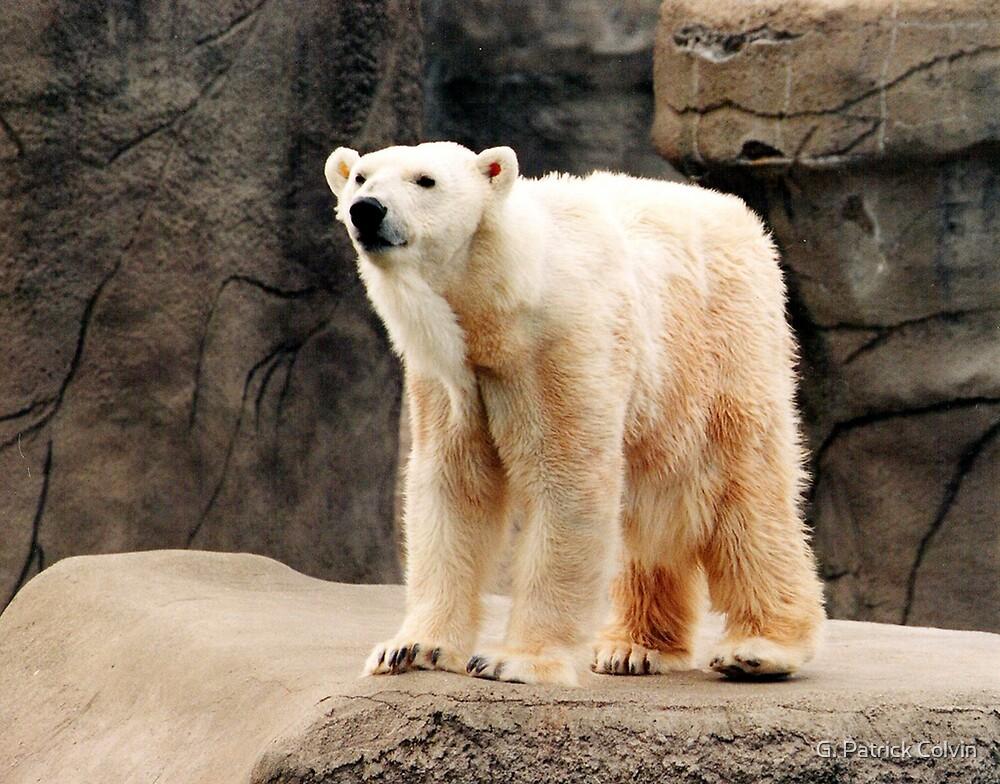 Polar Bear by Gregory Colvin
