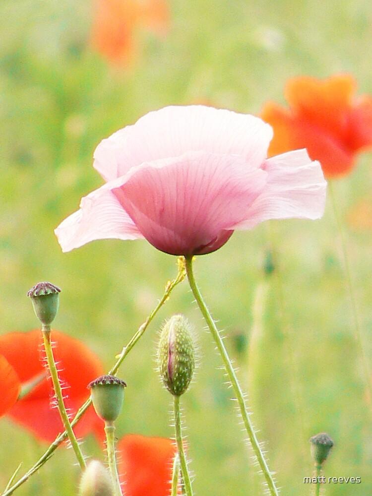poppy by matt reeves